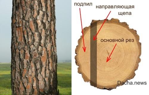 направляющая щепа спил дерева