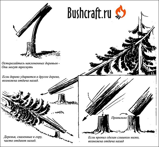 безопасность валки дерева